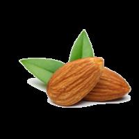 food-apricot-kernel